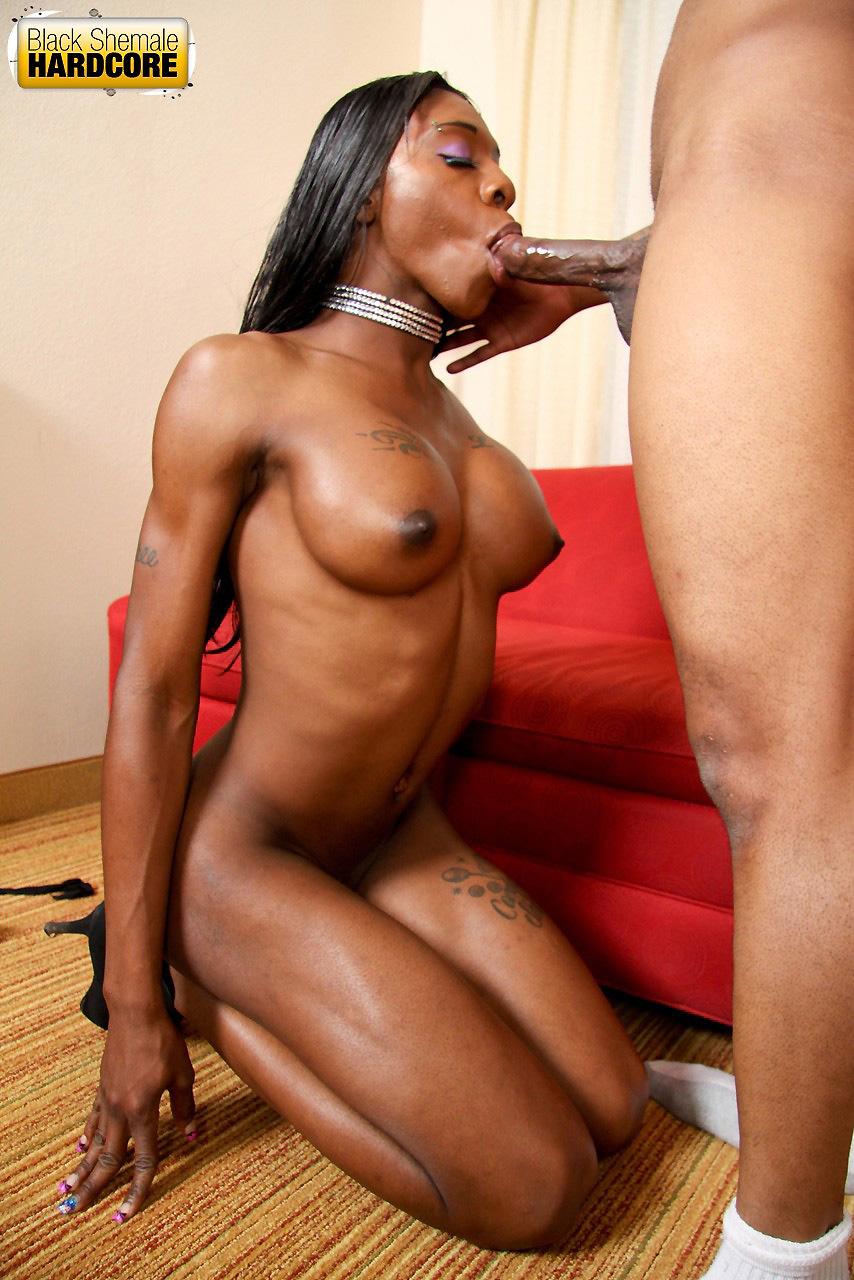 Ebony Shemale Blowjob - Ebony transgender blowjob Very HOT XXX site archive. Comments: 2